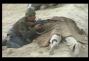 un film documentaire : Afghanistan, la guerre pour de vrai