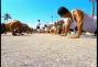 un film documentaire : Miami Beach